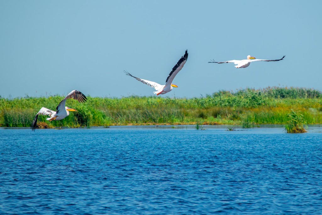 The Danube Delta – the youngest Romanian land
